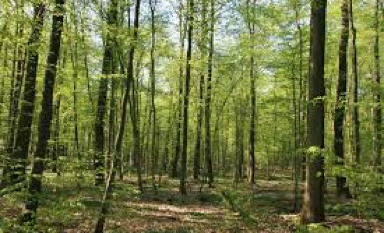 De la forêt de Haguenau vers le Rhin ( 67)