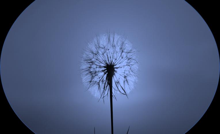 Les pouvoirs de la sagesse, clé du bien-être